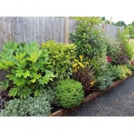 Evergreen Low Maintenance Border Low Maintenance Garden Design