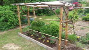 Dach Fur Tomaten Bauen Garten Tomaten Garten Gartengestaltung