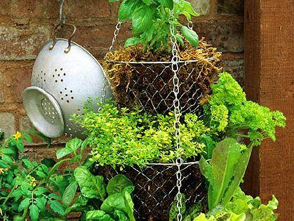 cool hanging herb garden idea!