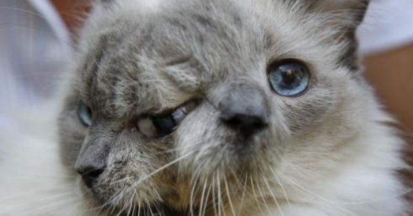 One And Half Cat Two Faced Cat Cats Animals