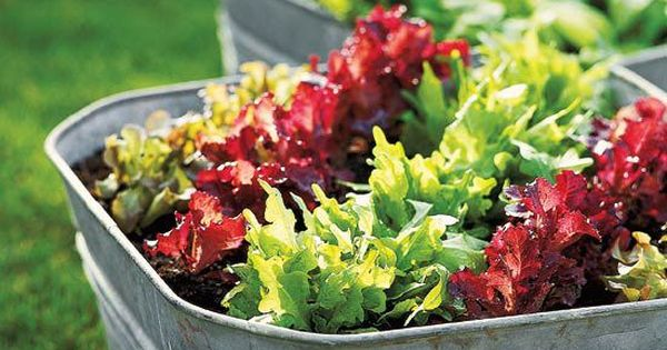 Simple salad garden containers fresh vegetables gardening vegetables and growing vegetables - Salads can grow pots eat fresh ...