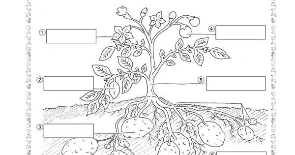 natur und leben arbeitsbl tter grundschule lehrerb ro sachunterricht pinterest. Black Bedroom Furniture Sets. Home Design Ideas