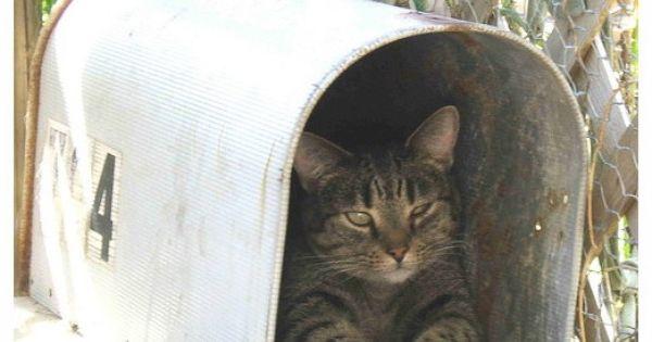 You've got mail! photo by beeblecat