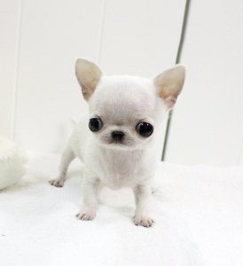 Its Eyes Are To Big For Its Head And I Love It 3 Teacup