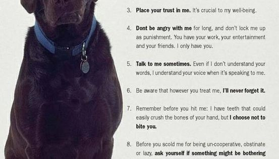 10 canine commandments! the number one reason is so true, can't stand