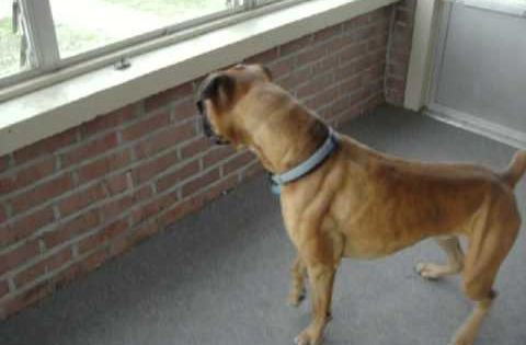 Dog Looking Out The Window By Eva Plevier Animals Baby Dogs Pets