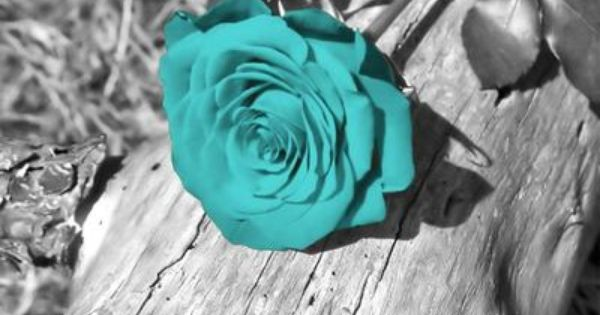 Black And White Background With A Teal Blue Rose Shades