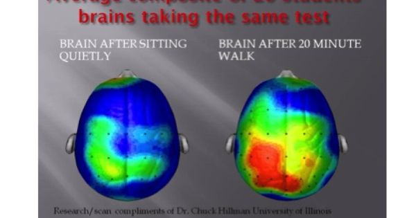 Brain Scans For Ptsd Brain Scan After Exercise