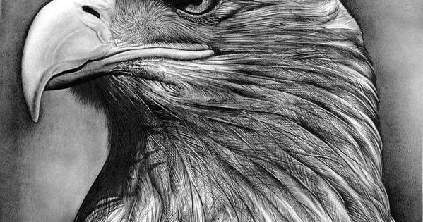 Pencil Sketches of Eagles | Eagle Head Pencil Drawing Bald ...