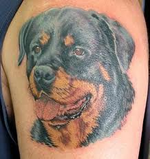 Rottweiler Tattoos And Meanings Rottweiler Tattoo Designs And
