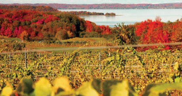 Autumn Vineyards Overlooking Grand Traverse Bay Near Traverse City Michigan Usaautumn Vineyards Overlooking Grand Traverse Bay Michigan Usa With Images Green Resort