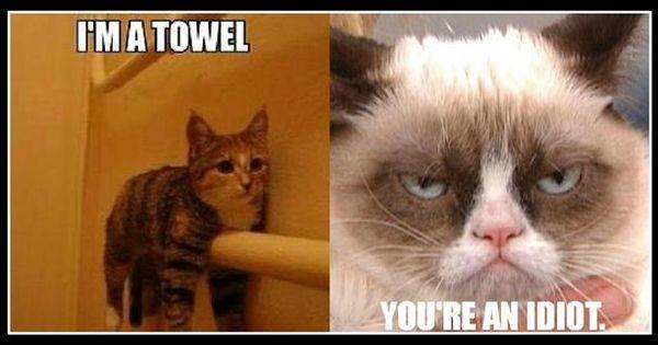 Look at me, I'm a towel! LOL GrumpyCat