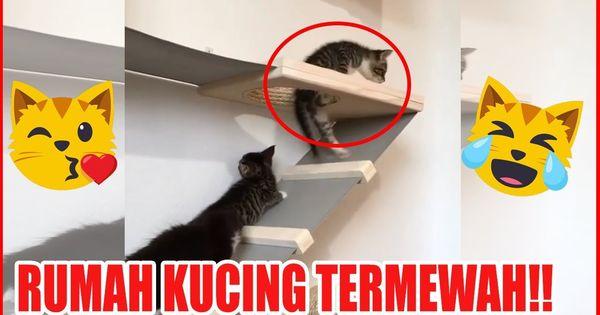 Kumpulan Video Kucing Lucu Anak Kucing Mengeong Berantem Marah Marah Ngakak 10 Menit Kucing Lucu Lucu Kucing Kucing Vs Air Lucu Ku Kucing Lucu Anak Kucing Lucu