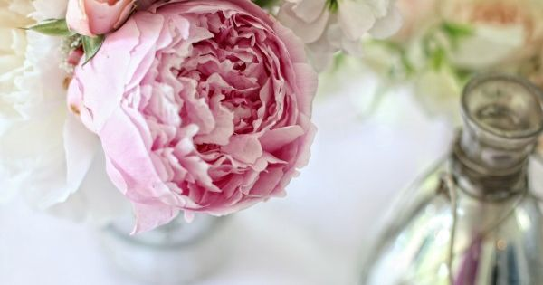 Pink Peach Blush Peony Rose Stock Centerpiece Blush Peonies Peach And Peony Rose