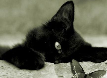 .I want a black kitten!