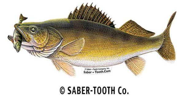 Amazon.com : Walleye with Perch Fish Decal Sticker ...