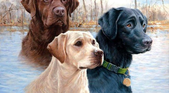 Labrador Retriever Dog Heads Three Colors On One 16 Inch Etsy In 2020 Dog Paintings Labrador Dog Retriever Dog