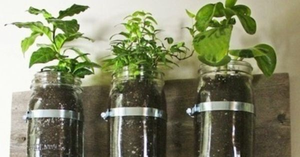 Indoor Herb Garden - along the kitchen sink, not on the wall