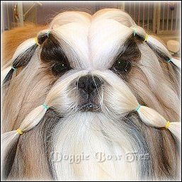 How To Band A Shih Tzu In Maintenance Topknots By Doggie Bow Ties Shih Tzu Dog Bowtie Little Pets