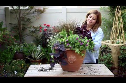How to create a shade container youtube for my garden pinterest garden shade gardens - P allen smith container gardens ...