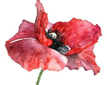 Poppy Flower Painting Original Watercolor Painting Watercolor