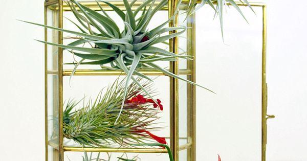 einfache tipps zur tillandsien pflege f r anf nger pflege tipps und pflanzen. Black Bedroom Furniture Sets. Home Design Ideas
