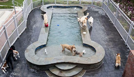 Luxurious spa paws hotel hundar pinterest hundar for 5 paws hotel salon
