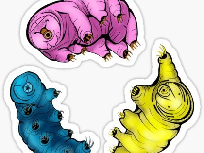 Science Stickers Tardigrade Science Stickers Synchronized Swimming