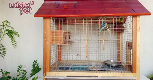 Misterpet Ae Bird Aviary For Sale In Uae Call Us
