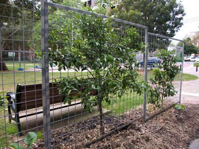 Urban Garden Casual My Fairy Tale Urban Fruit Orchard Urban Garden Espalier Fruit Trees Front Garden