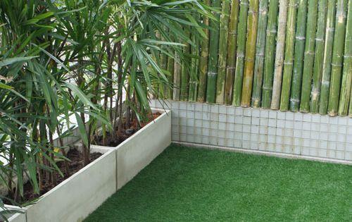 Bambou brise vue Jolis balcons Pinterest Balcons, Plantes et ...