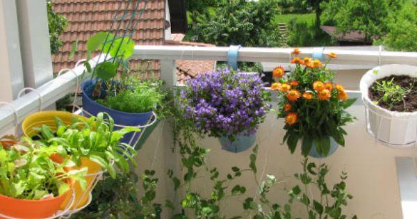 L 39 exposition crit re n 1 si on a peu de soleil dans la - Planter fraisier en jardiniere ...