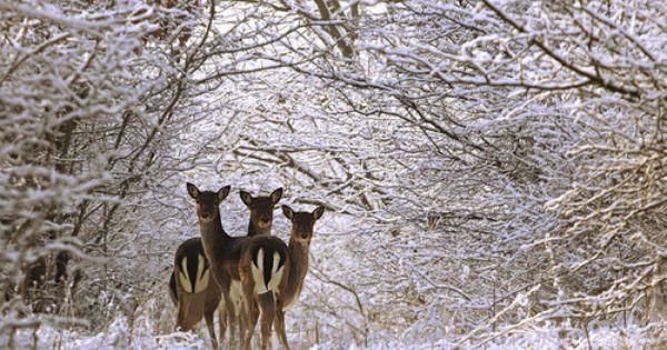 Tinywhitedaisies Winter Animals Animals Nature Animals