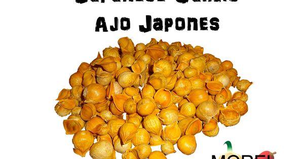 100% Natural Japanese Garlic or Ajo Japones. Lots of