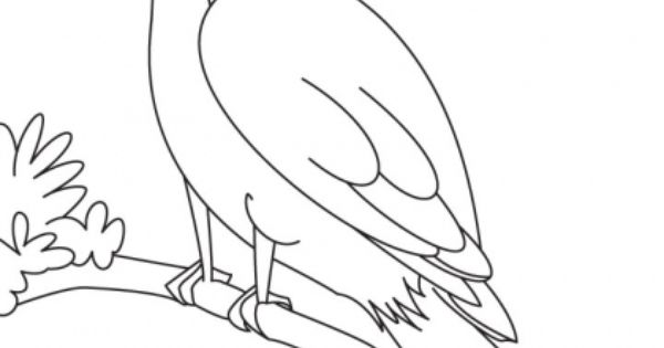 bird watching coloring pages - photo#10