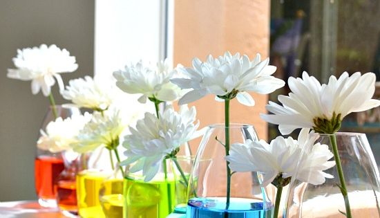 Party Decoration ideas / rainbow centerpieces - love white flowers with colored
