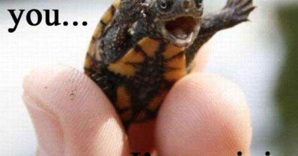 I love baby turtle humor.