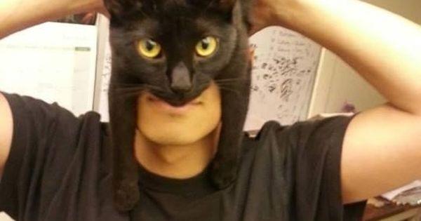Meet Catman. | How To Look Like Batman Using Your Cat~ I