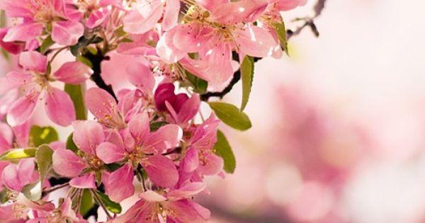 #Spring Cherry Blossom colour pink