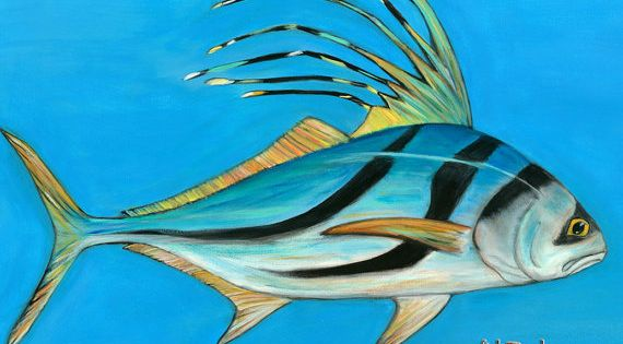 Rooster fish art print 11 x 14 fish print fish art fish for Rooster fish pictures