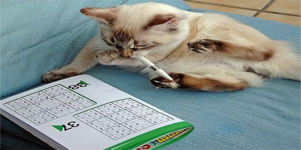 Unisci I Puntini Difficile: Sudoku Per Bambini: 60 Schemi 6×6 Di Media Difficoltà Da