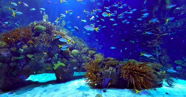 Saltwater fish tanks, Saltwater tank and Tanks on Pinterest