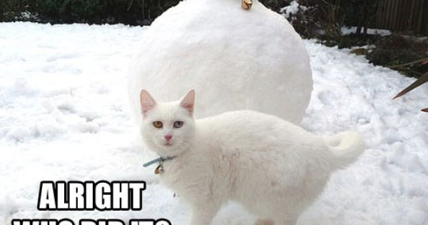 Who Did This - Cats, Cute, FunnyCats, Snow