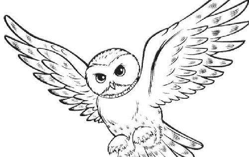 oil pastel coloring pages | Oil Pastel Owl Art Lesson | More Owl, Tattoo and Tatting ideas