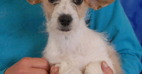 Julia is a precious, sweetheart puppy debuting for