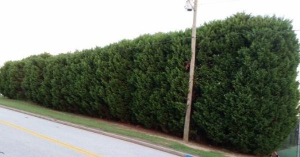 Pin On Hedges For Privacy