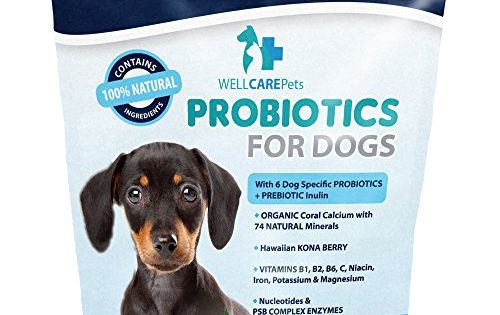 Well Care Pets Dog Probiotics Powder Supplement For More Information Visit Image Link Note It Is Affiliate L Dog Probiotics Dog Supplements Pet Probiotics