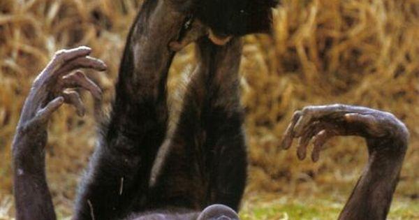 Bonobo monkeys - playing airplane lol my kids loved this game!!