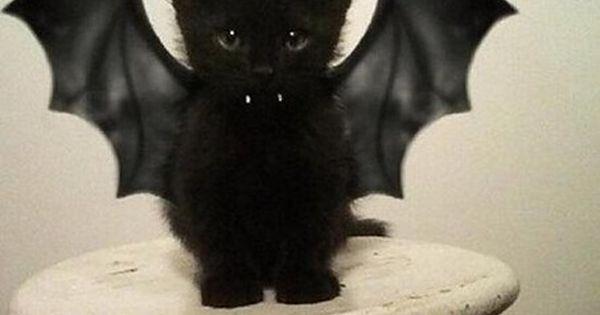 Black cat, bat Oh my gosh Leilah would look so adorable in