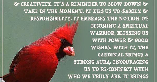 Red Cardinal, Symbolism, Bird, Animal, Totem, Spirit